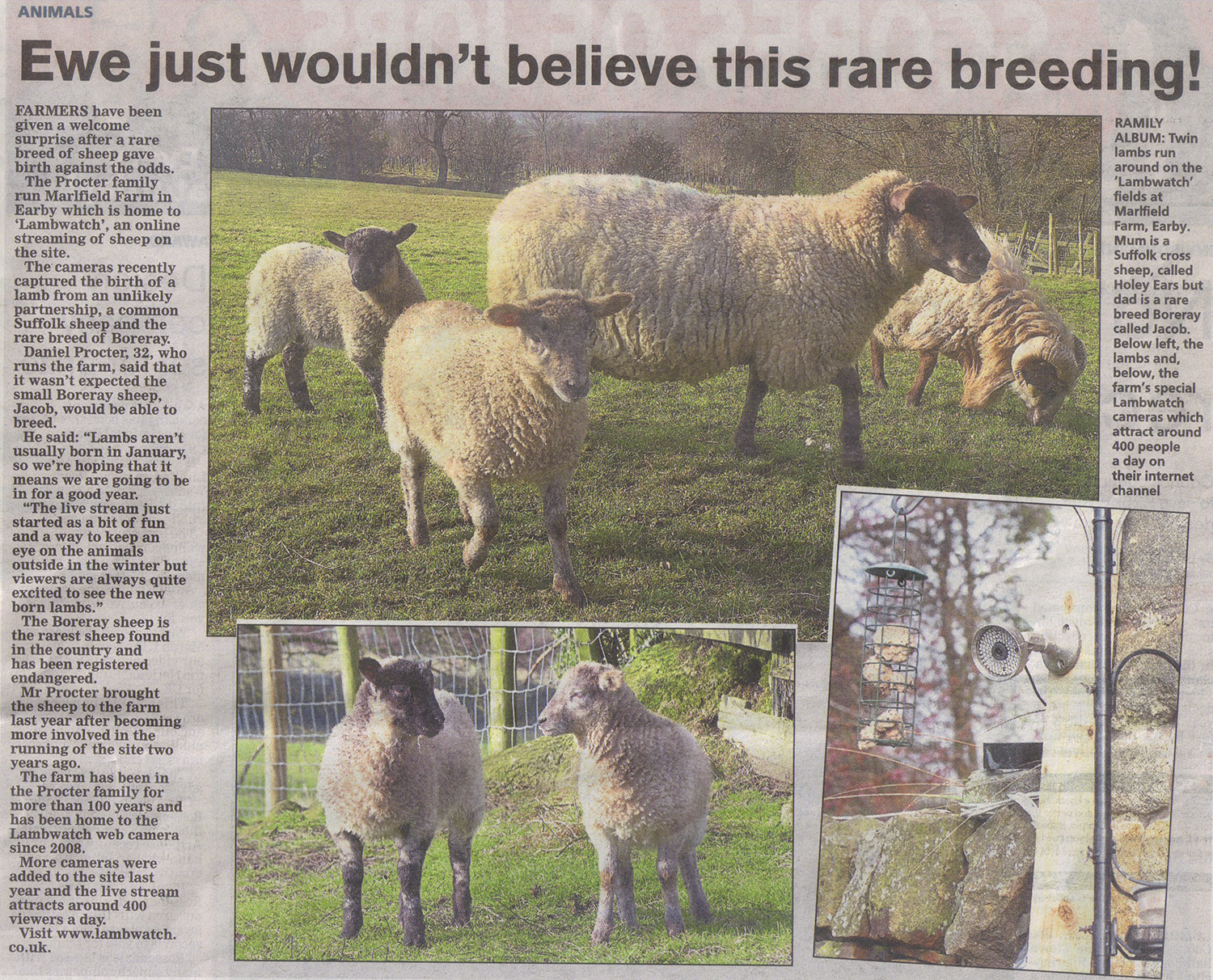 """Ewe wouldn't believe this rare breeding!"""